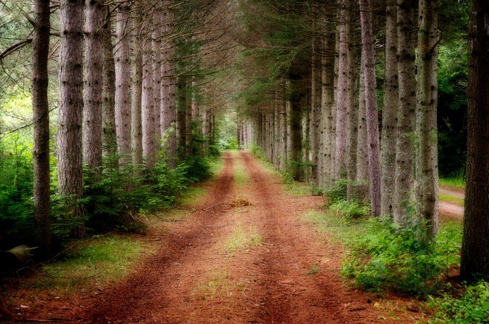 Sentier inspirant / Inspiring Path