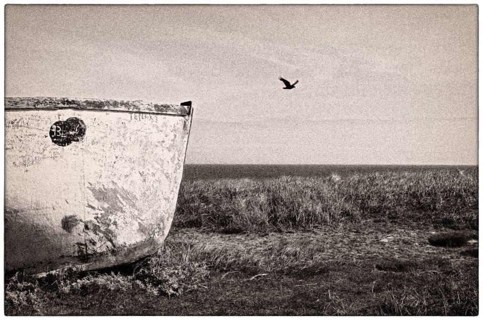 L'oiseau / The Bird