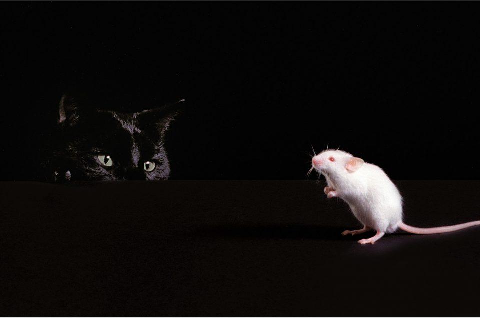 Chat noir et souris blanche / Black Cat and White Mouse